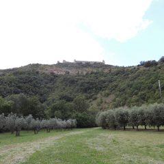 Bosco di San Francesco_Assisi_Land Art_Rocca Maggiore