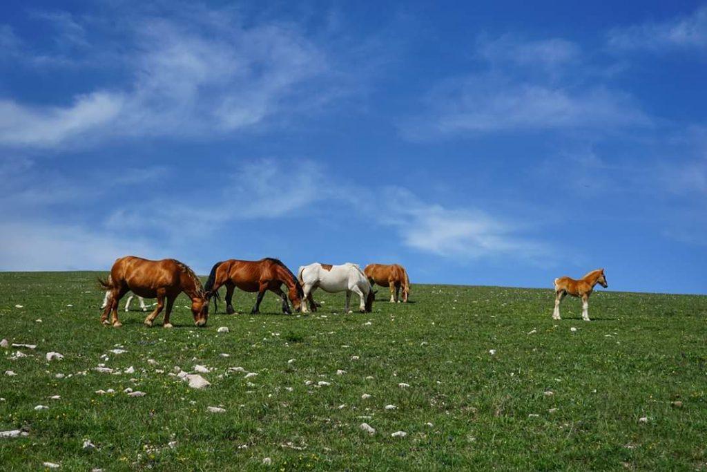 Parco del Monte Subasio_cavalli