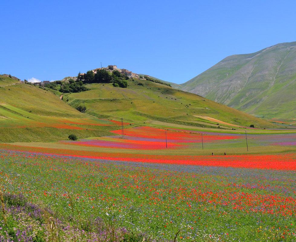 La fiorita di Castelluccio