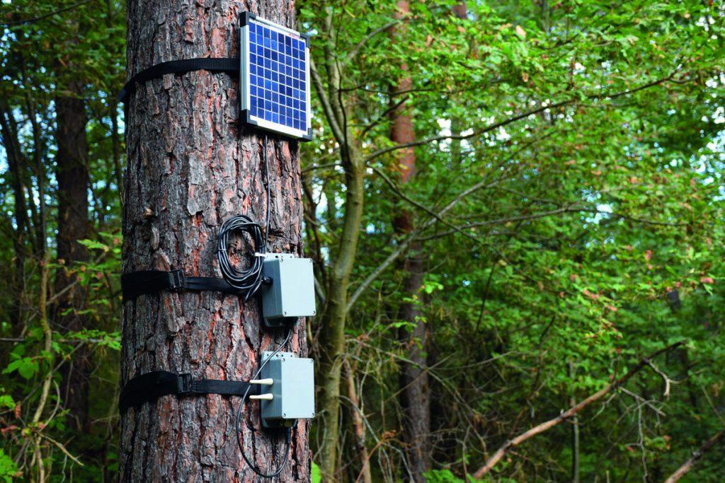 Foresta di Piegaro_alberi Talking Tree