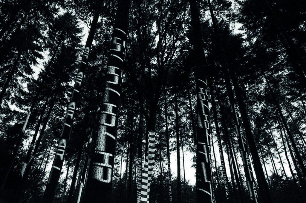 Foresta di Piegaro_Spot Listone Giordano